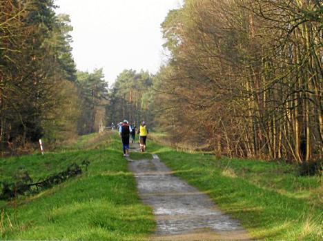 Pfungstadt-Wald