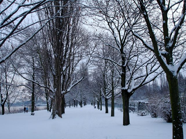 Schnee 12-10