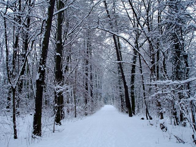 Schnee2 12-10