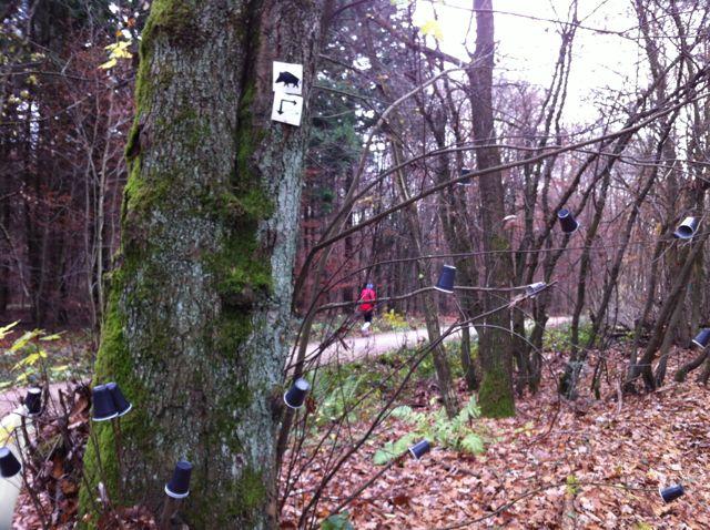 Im Spätherbst beginnen die Becherbäume im Lorsbachtal zu knospen. Ein herrliches Schauspiel der Natur.